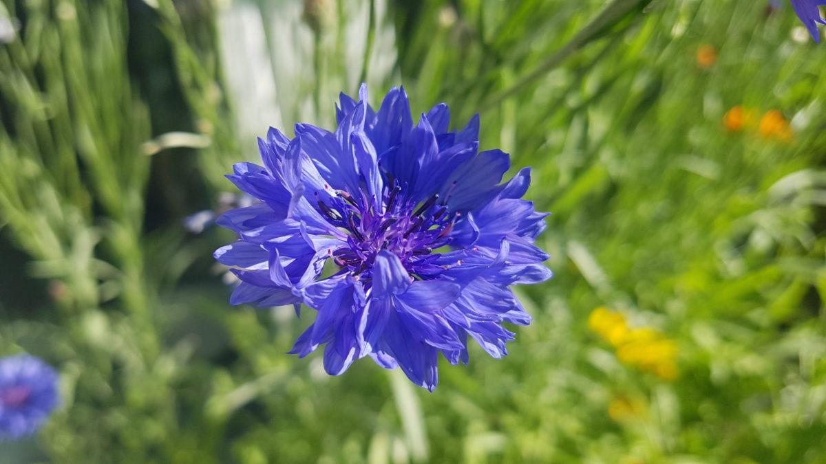 Mein Lieblings-Blau